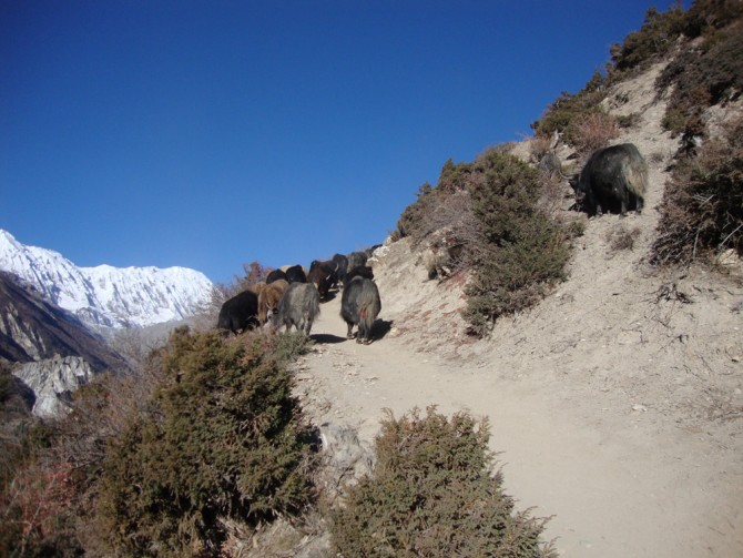 On the way to Tilicho Lake